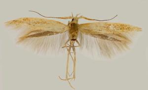 wingspan 12,5 mm