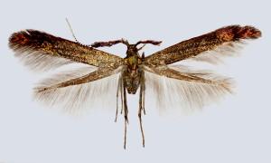 wingspan 13 mm