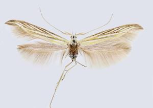 wingspan 25 mm
