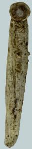 Coleophora meridionella (2)