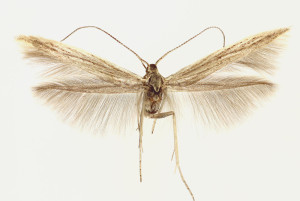 wingspan 14 mm