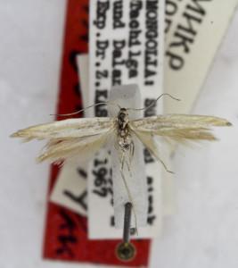 PARATYPUS, coll. TTMB, wingspan 15 mm