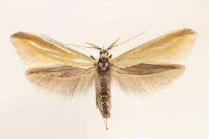 wingspan 22 mm