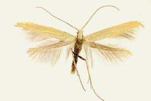 wingspan 15 mm