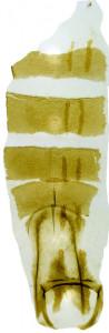13 - 2831 Coleophora spiralis abd.