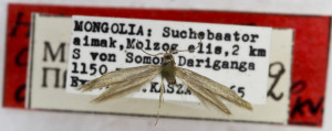 HOLOTYPUS, coll. TTMB, wingspan 14 mm