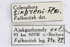 Coleophora singreni (1)